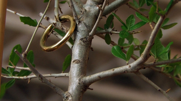 Wedding Ring, The Art Guys Marry A Plant